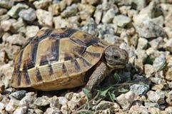 Mały żółw Obrazy Stock