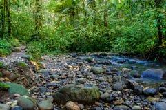 Mały amazonki dżungli sideriver z małą wodą wystawia skały i kurenda kształtujących kamienie zdjęcia royalty free