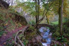 Mały antyczny most skały w zatoczce w drewnach Obraz Stock