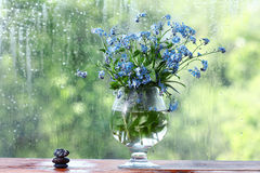 Mały błękit kwitnie czekoladę Zdjęcia Royalty Free