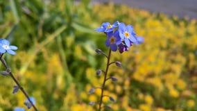 Mały Błękitny kwiatu tło zdjęcie stock