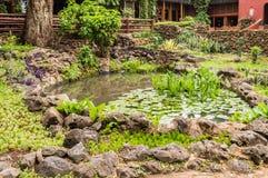 Mały basen woda z wodnymi lelujami i płochami otaczającymi losem angeles fotografia stock