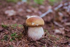 Mały biały grzyb obrazy stock