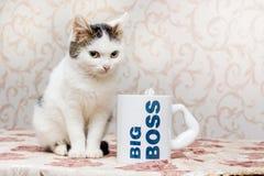 Mały biały kot siedzi obok kubka z wpisowym dużym bos obrazy stock