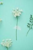 Mały biały kwiat na zielonym mieszkaniu obrazy stock