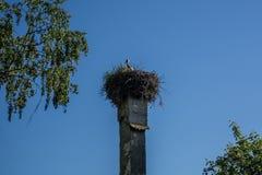 Mały bocianowy obsiadanie w gniazdeczku na wysokim starym kominie zdjęcie royalty free