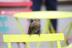 Mały brązu ptak z białymi punktami zdjęcia stock
