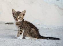 Mały brown kot w ulicie, kot w ulicie na słonecznym dniu, dziki kot, mały brown kot outside, kot w ulicie, ciekawej Zdjęcia Royalty Free