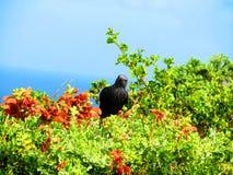 Mały czarny ptak umieszczający na roślinności Obrazy Royalty Free