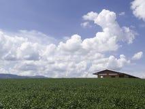 Mały czerwień dom, herbata i uprawiamy ziemię na wiele chmur tle Zdjęcia Royalty Free