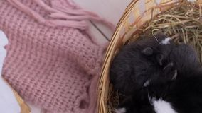 Mały dekoracyjny biały królika obsiadanie w kosz Wielkanocny świętowanie zbiory wideo