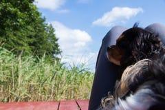 Mały doggy kłaść na swój właścicielu iść na piechotę z płochami przy suuny letnim dniem zdjęcie royalty free