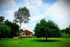 Mały dom po środku drzewa zdjęcie royalty free