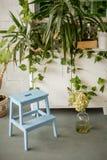 Mały drewniany krok drabiny wnętrze z zielonymi roślinami na tle w domu zdjęcie royalty free