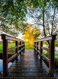 Mały drewniany most nad małym strumieniem woda w łąkowego krajobraz z kolorem żółtym barwił brzoz drzewa zdjęcie royalty free