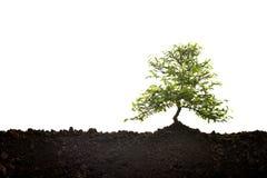 Mały drzewny dorośnięcie out od ziemi Obraz Royalty Free
