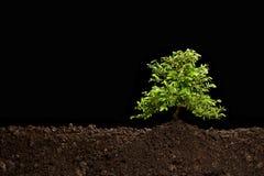 Mały drzewny dorośnięcie out od ziemi Zdjęcie Stock