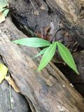 Mały drzewo obraz stock