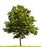 mały drzewo Fotografia Stock