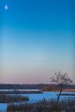 Mały drzewo i księżyc Obraz Royalty Free