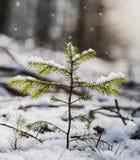 Mały drzewo zakrywający w śniegu Zdjęcia Royalty Free