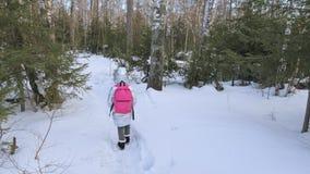 Mały dziecko chodzi w drewnach Dzieciak jest spacerem w brzozy miasta lasowym parku Dziewczyna chodzi w wieczór czasie z pięknym zdjęcie wideo