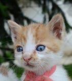 Mały dziecko kot Zdjęcie Royalty Free
