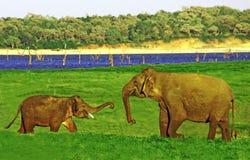 mały dziecko słoń, ojczulek opowiada szczęśliwie i Zdjęcia Stock