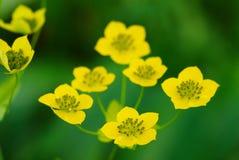 mały dzikie kwiaty żółty wielu Obrazy Royalty Free