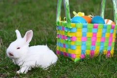 mały Easter królik zdjęcie stock