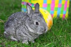 mały Easter królik obrazy royalty free
