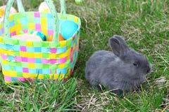 mały Easter królik zdjęcia royalty free