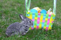 mały Easter królik obraz royalty free