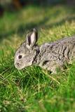 mały Easter królik zdjęcie royalty free