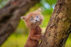 Mały figlarki obsiadanie na drzewie Figlarka chodzi pet Puszysty dymiący kot z ostrzyżeniem Groommer ostrzyżenia kot zdjęcia royalty free