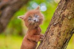 Mały figlarki obsiadanie na drzewie Figlarka chodzi pet Puszysty dymiący kot z ostrzyżeniem Groommer ostrzyżenia kot zdjęcie stock