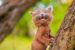 Mały figlarki obsiadanie na drzewie Figlarka chodzi pet Puszysty dymiący kot z ostrzyżeniem Groommer ostrzyżenia kot fotografia royalty free