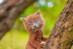 Mały figlarki obsiadanie na drzewie Figlarka chodzi pet Puszysty dymiący kot z ostrzyżeniem Groommer ostrzyżenia kot obraz royalty free