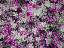 Mały fiołkowy kwiat i liść Obraz Stock