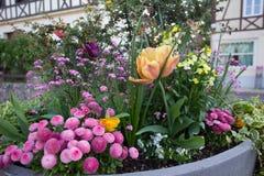 Mały flowerbed w balii obraz royalty free