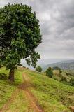 Mały footpath obok wielkiego drzewa w średniogórzach Cameroon z dramatycznym chmurnym niebem, Afryka Fotografia Stock