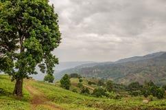 Mały footpath obok wielkiego drzewa w średniogórzach Cameroon z dramatycznym chmurnym niebem, Afryka Zdjęcie Stock
