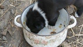 Mały głodny szczeniak liże szczątki jedzenie w niecce zbiory