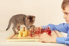 Mały grandmaster z pasiastą figlarką bawić się szachy zdjęcia stock