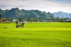 Mały hovel w rolnym ryżu krajobrazie zdjęcia royalty free