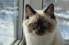 Mały i elita kota obsiadanie na okno obraz royalty free