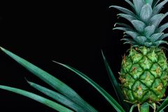 Mały i młody zielony narastający ananas odizolowywający na czarnym tle z kopii przestrzenią obraz stock