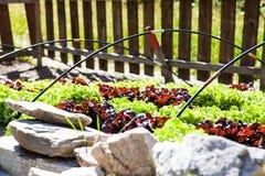 Jarzynowy ogród obraz stock