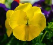 Mały jaskrawy kwiat zdjęcia stock