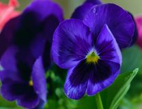 Mały jaskrawy kwiat fotografia stock
